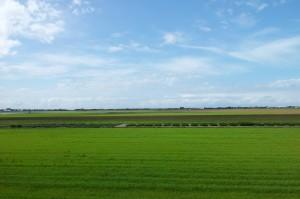 uitzicht polder Koegras